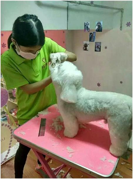 宠物美容专业介绍